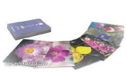 フラワーエッセンス 講座  花カード